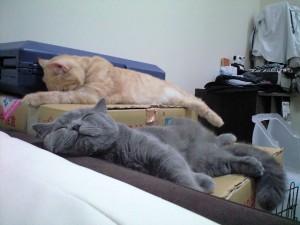 寝ているときが一番幸せ♪
